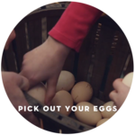 How to Buy Eggs from a Petite Farm