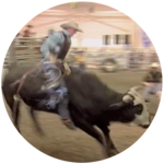 Wacey (Bull Riding)