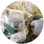 Down Under – Featherdale Wildlife Park