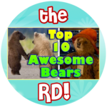 """Paddington"" inspired Top 10 Awesome Bears!"