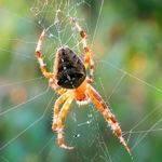 SPIDERS: Facts about Spiders - Orb Weaver Spider | Are you Afraid of Spiders?